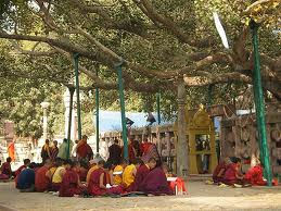 Under the Bodhi tree where the Buddha reached enlightenment.