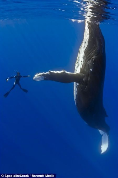 109184,xcitefun-dancing-with-whales-04